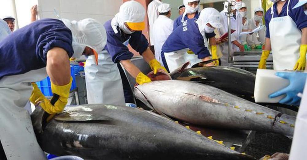 Les exportations vietnamiennes de thon au Mexique se redressent
