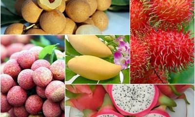 Fruits et légumes: 5 milliards de dollars d'exportation prévus en 2020