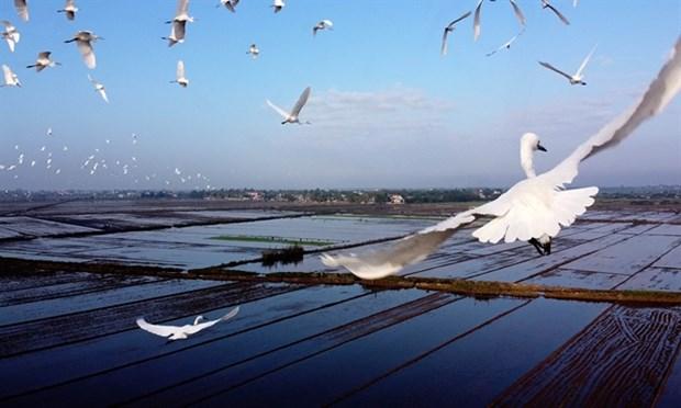Thua Thien-Hue prend des mesures pour protéger les oiseaux sauvages