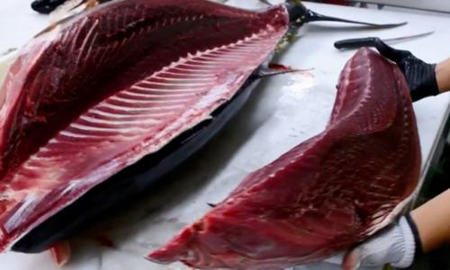 Forte chute des exportations nationales de thon