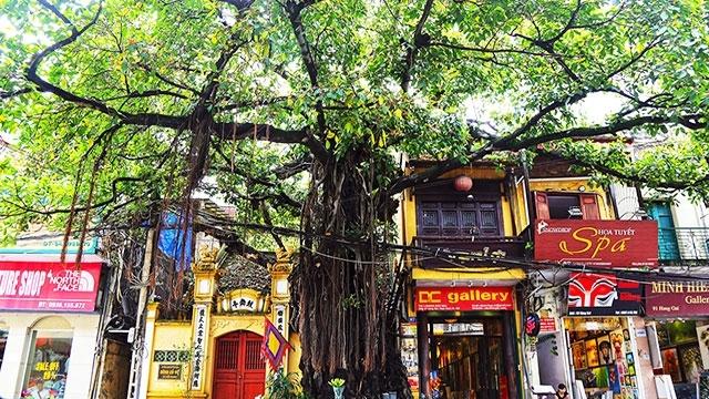 Les banians aident à échapper à la touffeur estivale à Hanoi