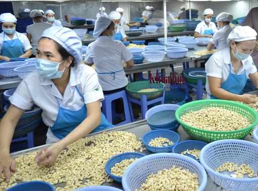 Noix de cajou: Près d'un milliard de dollars d'exportations en 4 mois