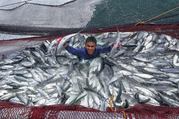 Les Philippines proposent à la Banque mondiale de soutenir son projet FishCore