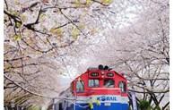 Promouvoir les échanges touristiques Vietnam-République de Corée
