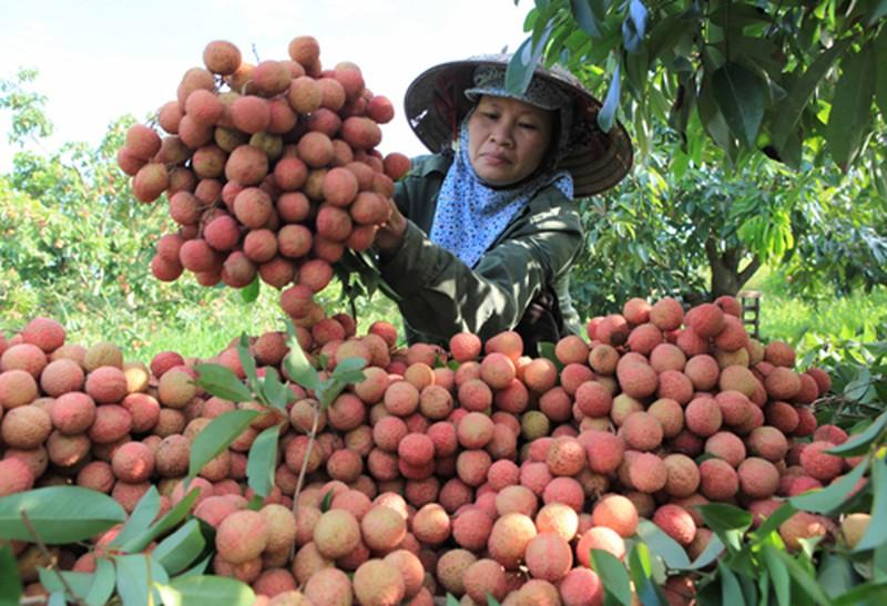 Les exportations de fruits et légumes atteignent plus  de 1,5 milliard de dollars en six mois