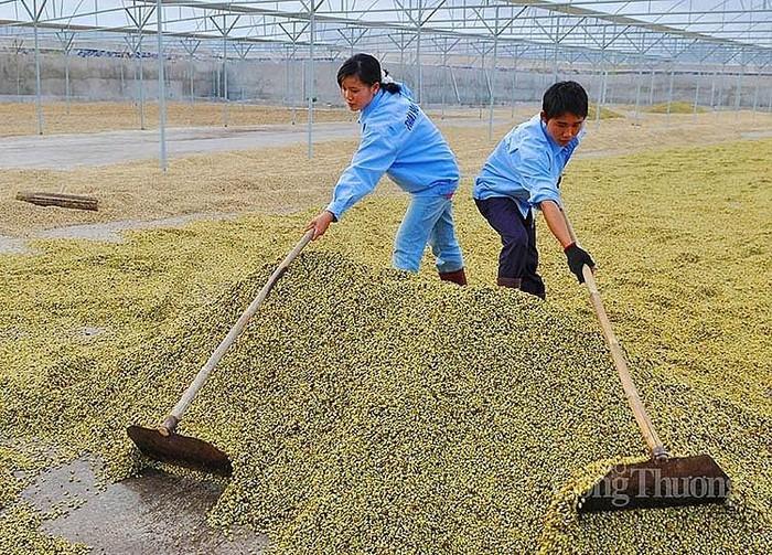 Élargir les exportations vers le marché chinois