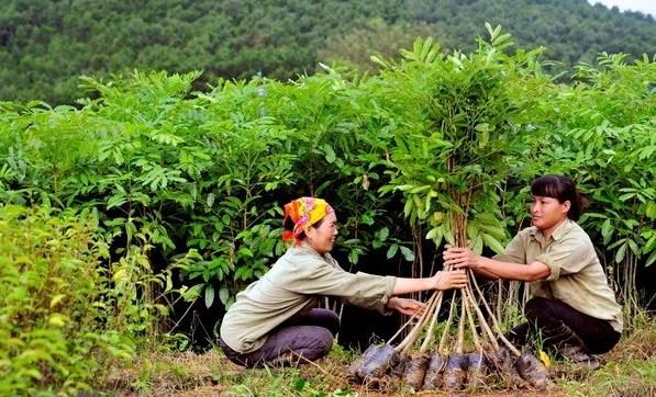 106.300 hectares de forêt concentrée plantés au premier semestre 2020