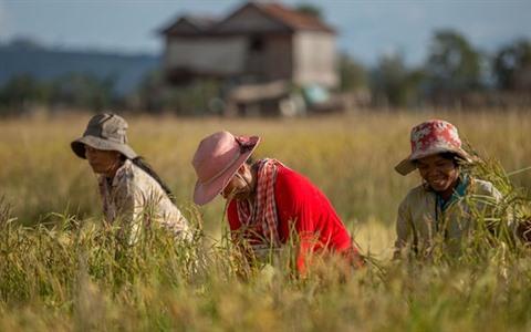 La production agricole pourrait contribuer à 32% du PIB du Cambodge en 2020