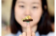 L'AFP salue les plats miniatures d'une jeune Vietnamienne