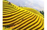 Nord-Ouest: La belle saison de Lào Cai arrive