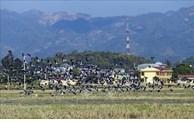 Des milliers de Bec-ouverts indiens observables dans le Centre du Vietnam