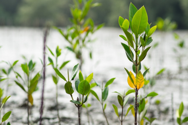 Proparco soutient des projets verts et les PME au Vietnam