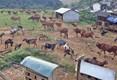 Nghe An: la pauvreté ne cesse de reculer grâce aux modèles de développement de la production