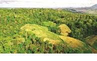 Protection des ressources forestières