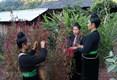 Festival des fleurs de célosies de l'ethnie Cong