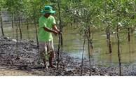Des ménages de Tra Vinh plantent des forêts pour prévenir l