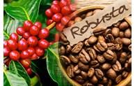 Café: Les exportations s
