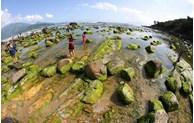 L'Heure de la Terre 2021 encourage les efforts conjoints pour alléger le fardeau de la nature