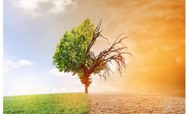 Changements climatiques: l'OIF s'engage en faveur des producteurs agricoles