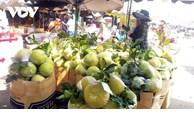 Le Vietnam, premier fournisseur de fruits à Taïwan