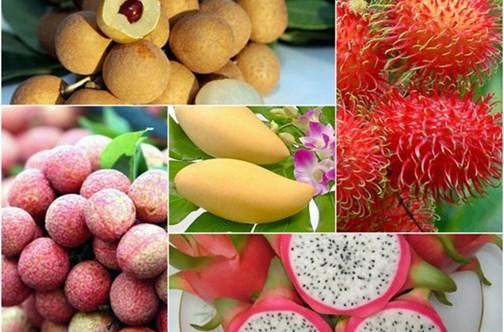 Exportations de fruits et légumes: de belles perspectives cette année grâce aux ALE