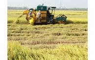 An Giang doit accélérer la transformation numérique de son agriculture