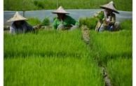 ASEAN: promotion du rôle des femmes dans l