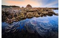 Une photo de corail prise à Phu Yen primée au concours de la Royal Society of Biology