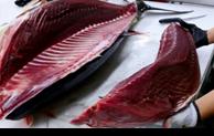 Les exportations de thon vers la Chine multipliées par trois
