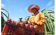 Hausse des exportations de fruits et  légumes  vietnamiens en Corée du Sud