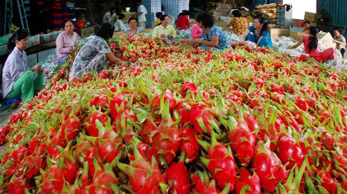 越南对中国的农产品出口额飙升