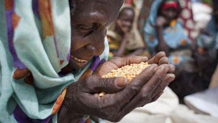 国际社会呼吁加强合作 保障粮食安全