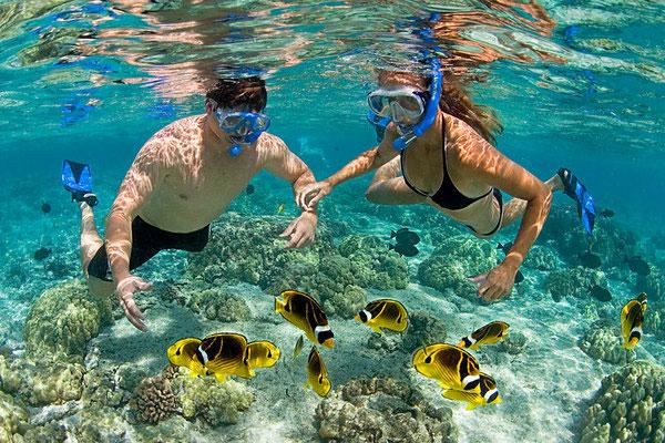 2017年富国岛县力争接待游客180多万人次