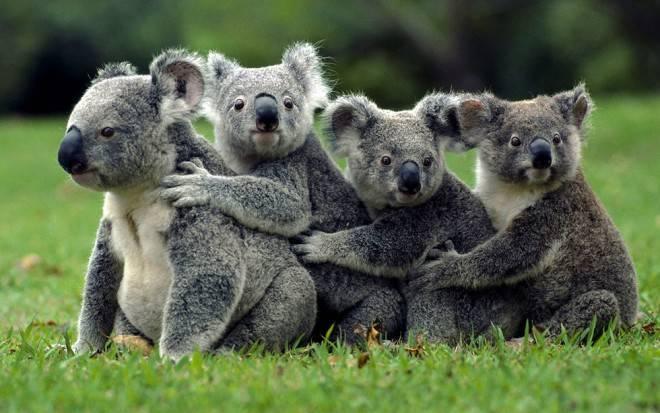 联合国呼吁全球努力保护野生动植物