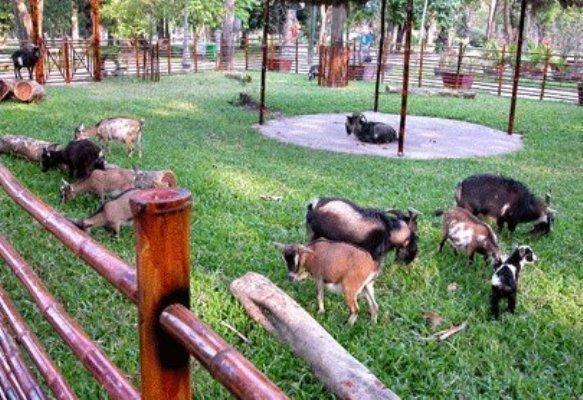 胡志明市拟将Saigon Safari公园建成生态旅游度假区