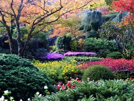 新研究说全球有超过6万种树木