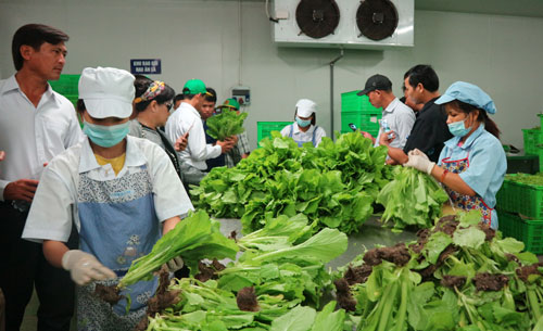 促进投资以提高九龙江平原地区食品价值链