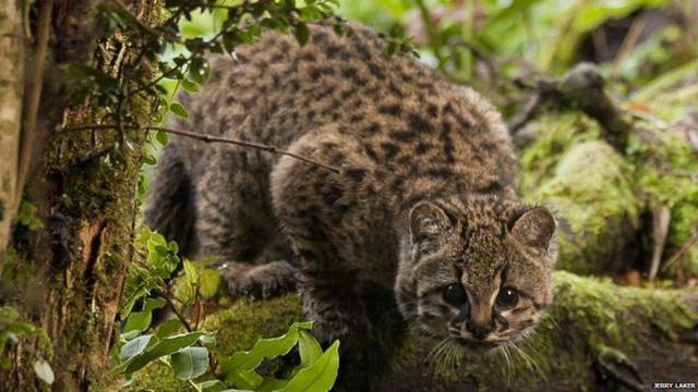 人类活动占地太多 动物生息范围狭小
