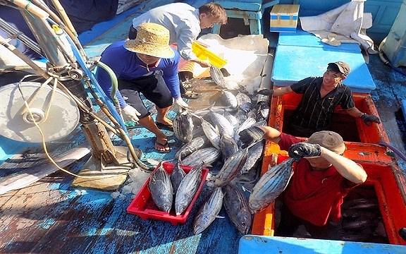 越南庆和省:渔民前往长沙渔场开始新渔季