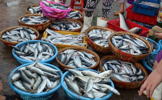 岘港市发布海产品追溯计划