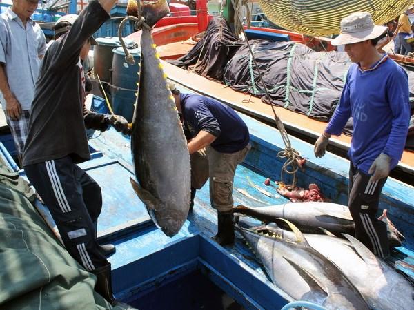 越南按欧委会劝告逐步开展整顿 保障渔业负责任和可持续发展