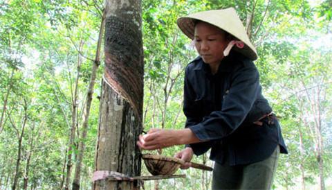 中国加大对越南的橡胶进口力度