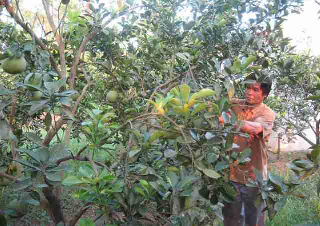推动北宁省农业结构重组的动力