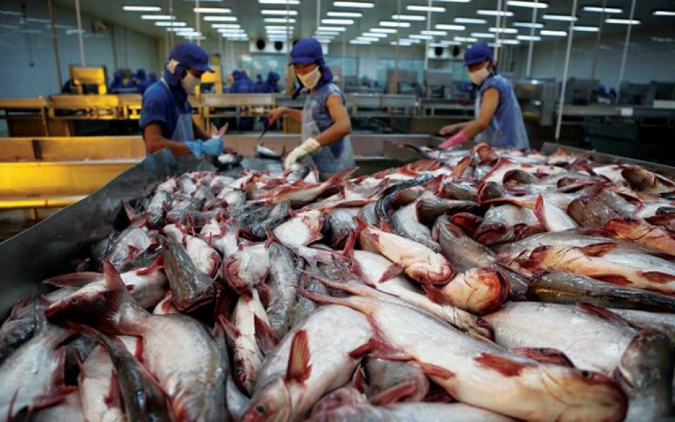 越南企业须严抓输出中国的茶鱼质量