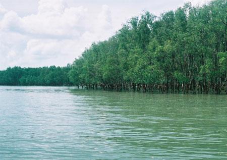 全球变暖致森林土壤吸收温室气体能力下降