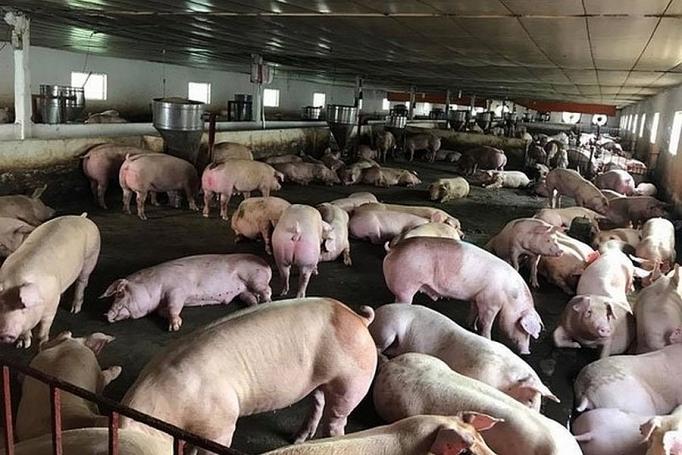 越南暂停进口来自匈牙利和波兰的猪肉及其制品