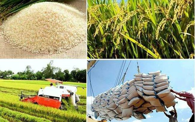 澳大利亚米业巨头集团在越南投产大米