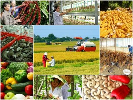 农业结构重组五年后:越南农产远销世界