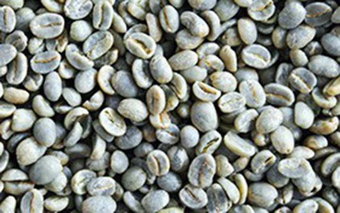 咖啡成为阿尔及利亚从越南进口最热门产品