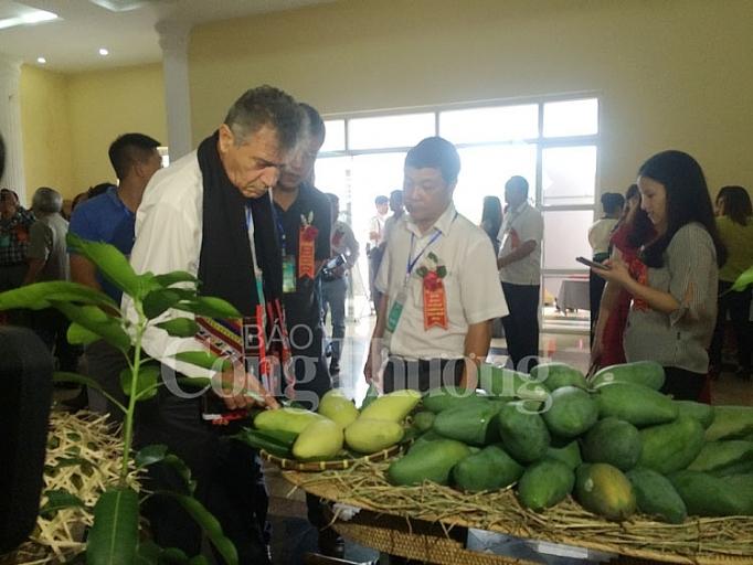 越南山罗燕州芒果远销美国和英国市场